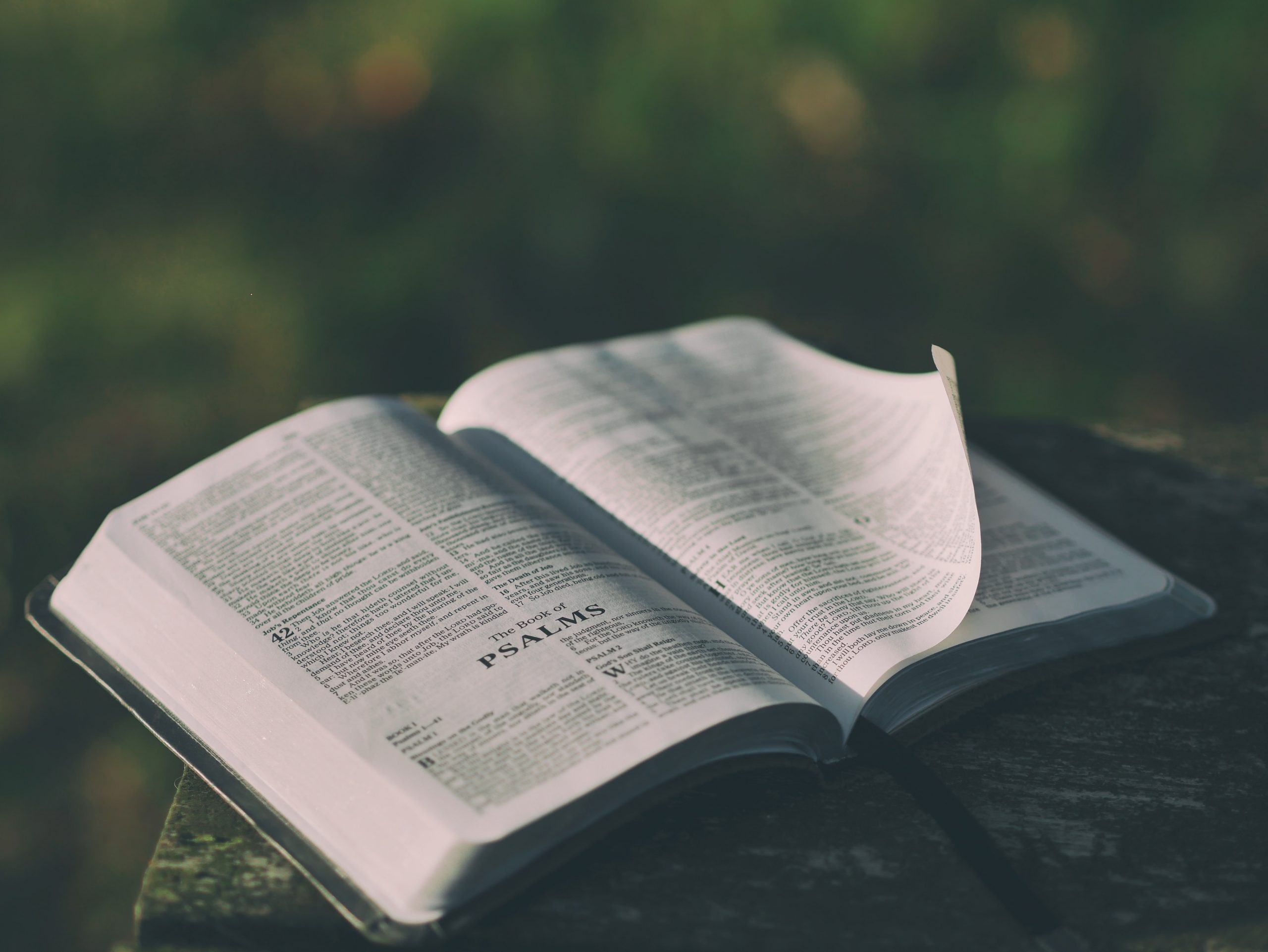 The Adventure of the Book of Psalms | Sandra Richter