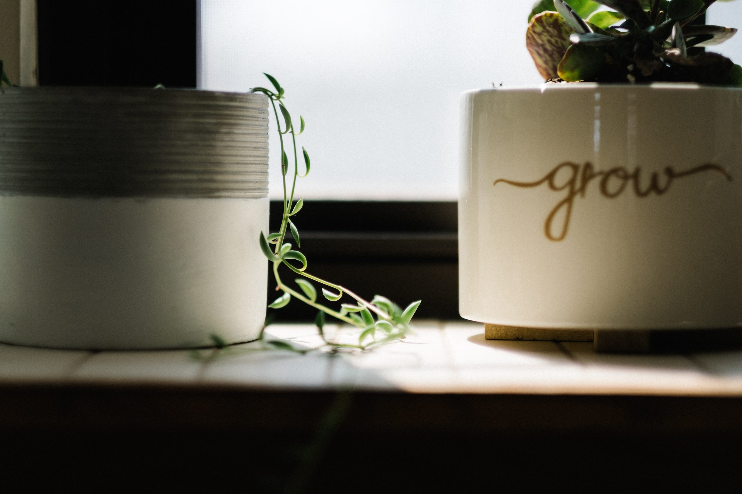 30 Days to Growing in Your Faith | Max Anders